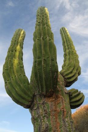 2016-05-02 Baja California (138)