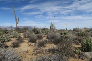 kilometerlange Wüste mit vielen verschiedenen Kakteen