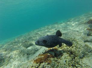 die Unterwasserwelt ist faszinierend