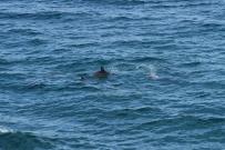 plötzlich spotten wir Delfine vom Auto aus, ein Schauspiel!