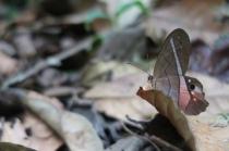 mariposa (Schmetterling auf Spanisch)