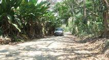 unterwegs neben Bananenbäumen