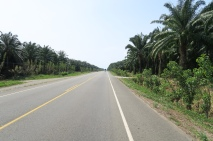 Kilometerlange Ölpalmenplantage