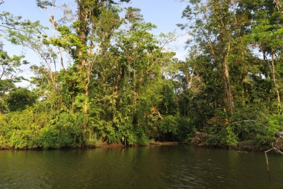 in den schönen Regenwald