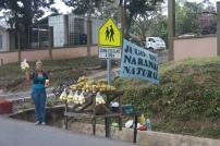 Fruchtstand direkt am Strassenrand