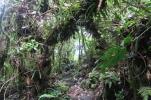 die Wanderung führt durch den Regenwald