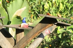 ein schön blauer Vogel