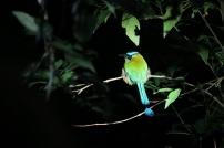 ein wunderschöner Vogel