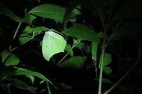 grüner Schmetterling