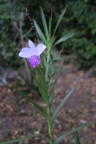 ums Haus herum pflegt Walti über 200 verschiedene Orchideen