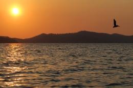 Pelikan bei Sonnenuntergang