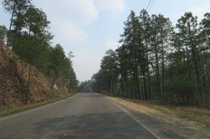 hier gibt es viele Kiefernwälder