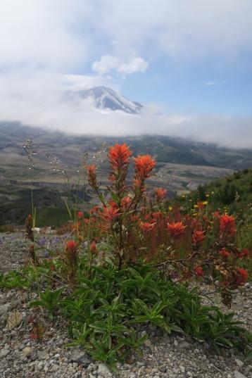 schöne Blumen wachsen bereits wieder im Vulkangebiet