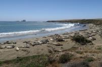 eine Seelöwen- Kolonie sonnt sich