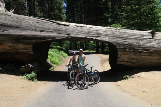 ein extra zugeschnittener Sequoia