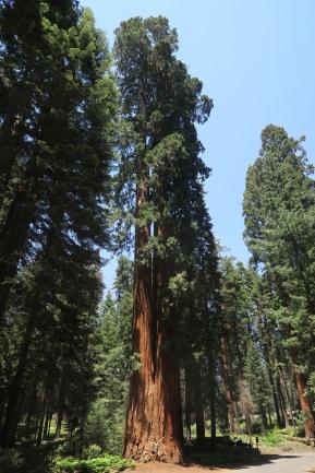 ein Vergleich muss gemacht werden um die grösse der Bäume zu erkennen.