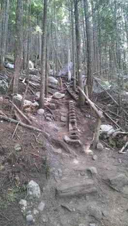 originelle Treppen im Baumstamm