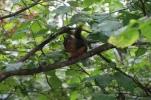 Eichhörnchen gibt es hier Massenweise