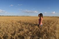 riesige Getreidefeld