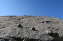 Schnecken auf den Rocks